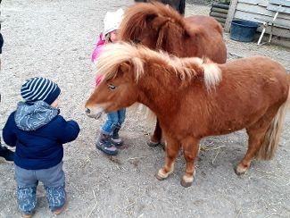 Mit kleinen Ponys groß werden